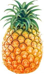 Ananas Abasto