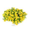 Calibrachoa - Million bells Montano květiny