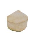 Kokos čerstvý Titbit