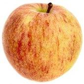 Jablka Gala Bohemia Apple