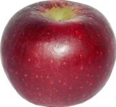 Jablka Red Winter
