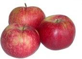 Jablka letní Paulared