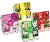Kolekce květinových cibulek