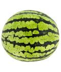 Meloun vodní Baby