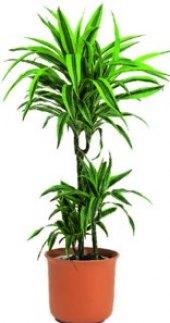 Mix zelených rostlin