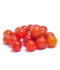 Rajčata cherry Albert