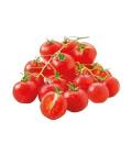 Rajčata koktejlová