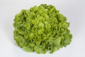 Salát Insalatina Biondo