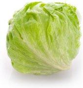 Salát ledový Abasto