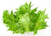 Salát listový Crispy