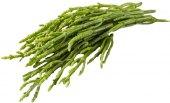 Salicornia Abasto