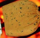 Sýr uzený tvarohový Lukšiu