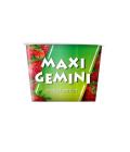 Zmrzlinová dřeň Maxi Gemini Plombir